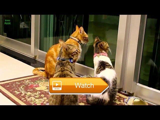 My Cute Animals Kucing Lucu Dan Bikin Gemess  Kumpulan Video Hewan Peliharaan Rumah Or Hewan Kesayangan Hihi Kucing Kesayangan Gw Nih Muach Hee  on Pet Lovers