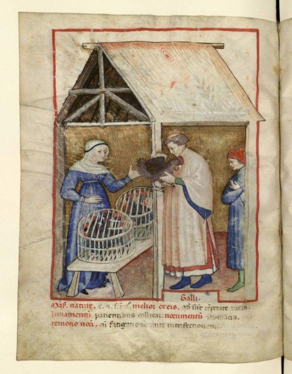 Nouvelle acquisition latine 1673, fol. 68v, Marchand de volaille. Tacuinum sanitatis, Milano or Pavie (Italy), 1390-1400.