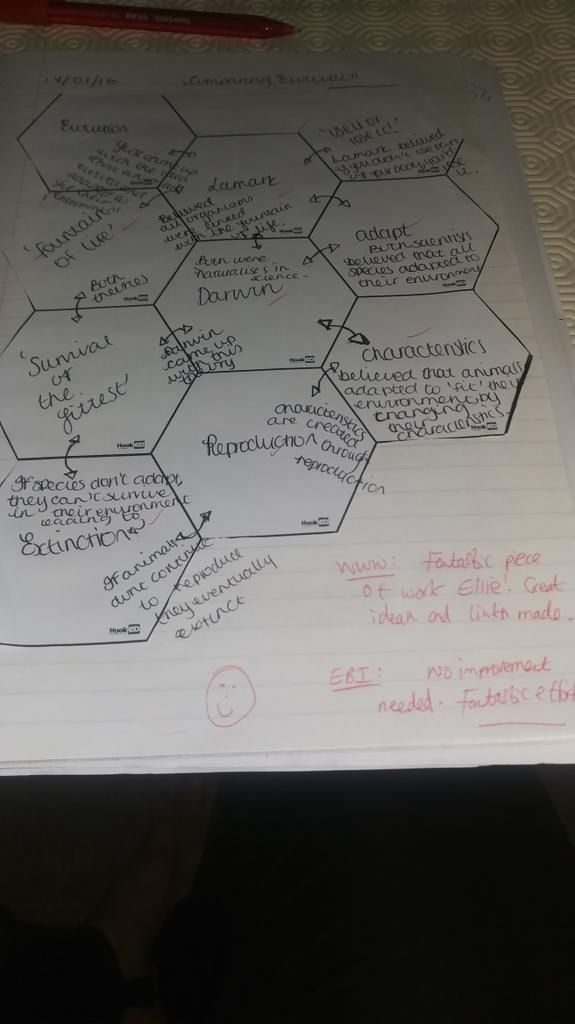 """missorr on Twitter: """"Another great piece of work from one of my students! #Darwin #Evolution #biology #solotaxonomy https://t.co/qPw8zNl0np"""""""