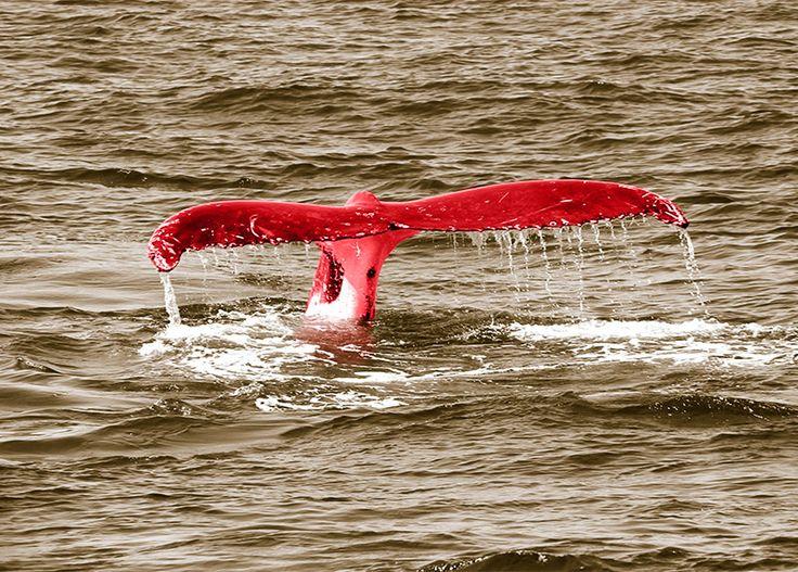 WallArt - Whale Tail - Presentorium