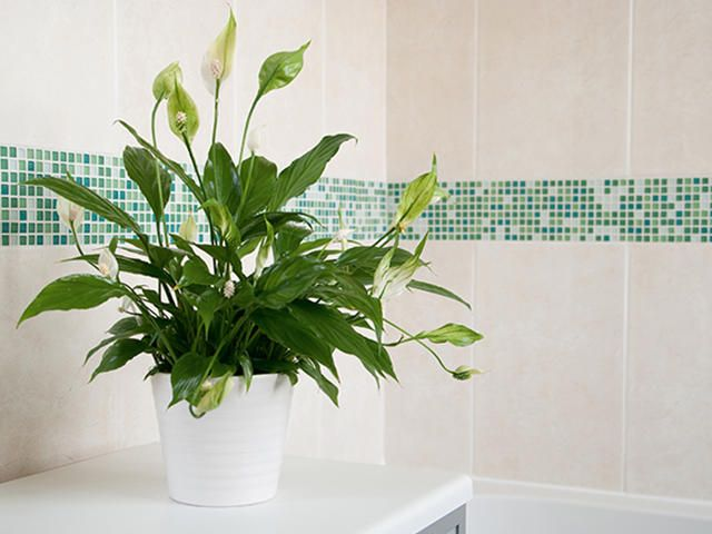 This Pinterest-perfect trend does more than keep your bathroom Insta-ready.