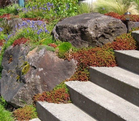 730 Best Rock Garden Ideas Images On Pinterest: 300 Best Images About Rock Gardens & Ground Covers On