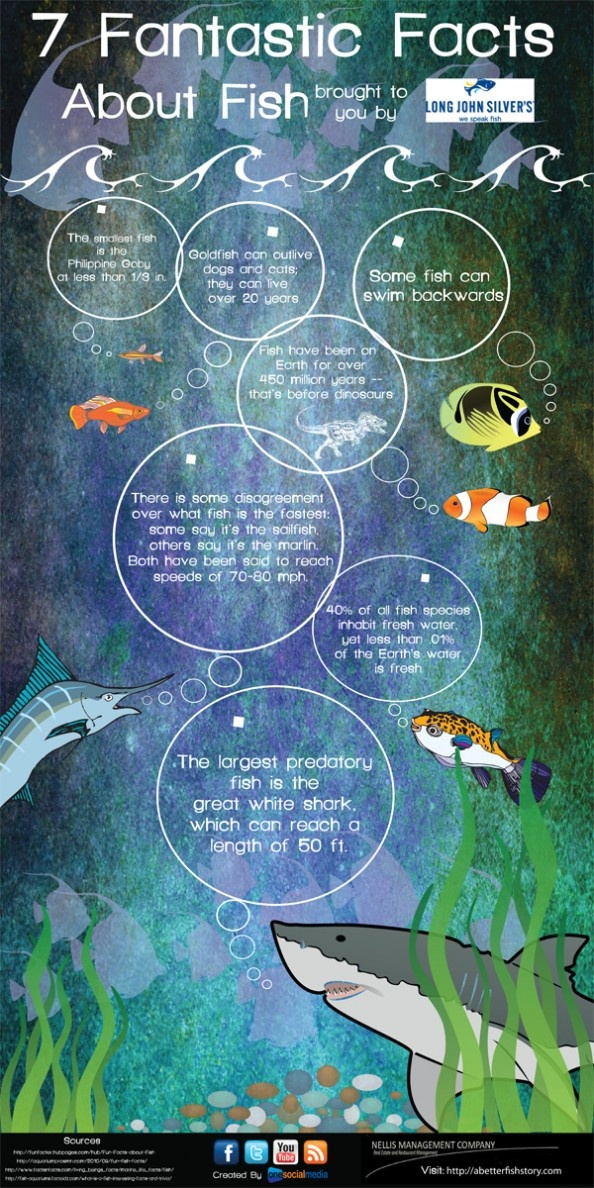 7 Fantastic Facts About Fish Infographic  bigislandreale.com loves you to be informed about our beloved sea creatures.