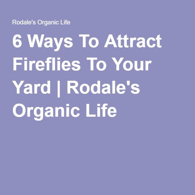 6 Ways To Attract Fireflies To Your Yard | Rodale's Organic Life