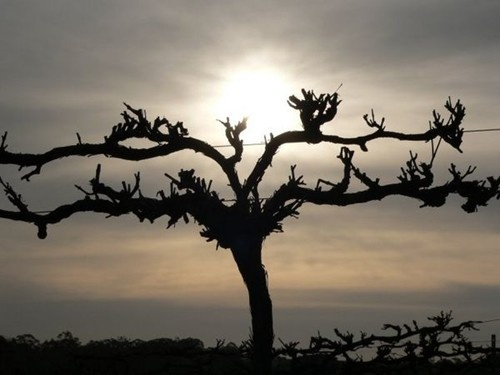 17 Best Images About The True Vine On Pinterest Vineyard
