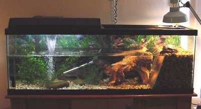 I like the idea of a waterfall under the uva/uvb/moon light and the separate basking area for the heat lamp