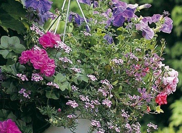 7 patrons de potées fleuries à réaliser soi-même