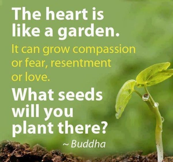 Image result for seeds quotes