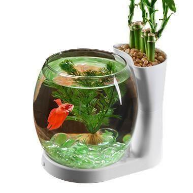Betta Fish Bowl & Planter Desktop Tank .75 gal White