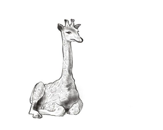 This adorable baby giraffe would be perfect in a modern or safari themed nursery! Gender neutral and precious, this handmade animal artwork would give your babys room that special touch.  This illustration is hand drawn and digitally coloured by Caverly Smith. WHY PRINTABLE?  Once payment is cleared, you can download your files directly from your Etsy account. You can print the artwork on paper or material of your own choice. There is no shipping cost or wait for item to be delivered via…