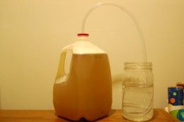 Milk Jug Mead, the perfect way to make your first batch of honey wine.