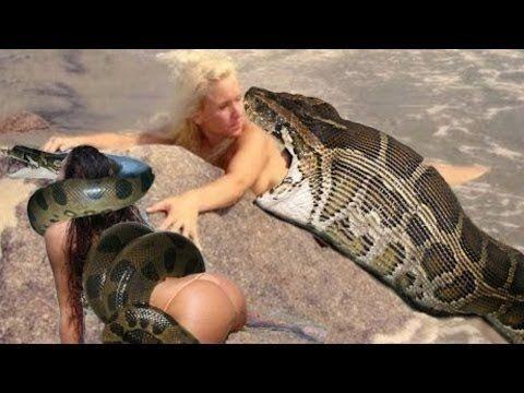 Giant Snake - Anaconda Eats, Giant Python  । এনাকনডার পেটে বিশাল আকারের ...