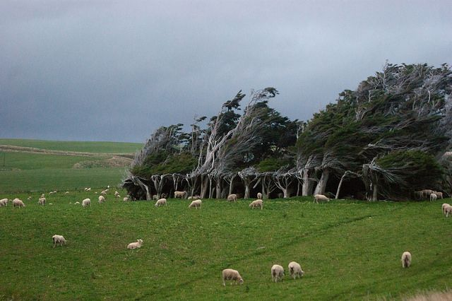 Slope Point Southland New Zealand
