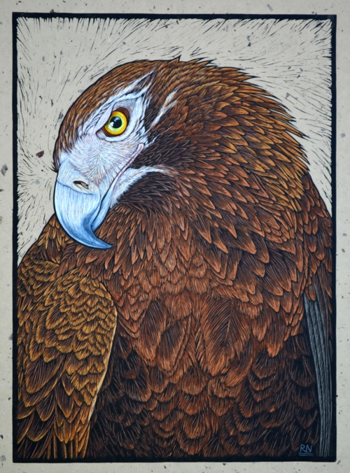 Wedge-Tailed Eagle . 51.5 x 37 cm    Edition of 50 . Hand coloured linocut on handmade Japanese paper . Rachel Newling