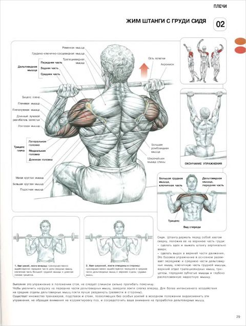 Анатомия силовых упражнений. Для мужчин и женщин. (Плечи — упражнения)