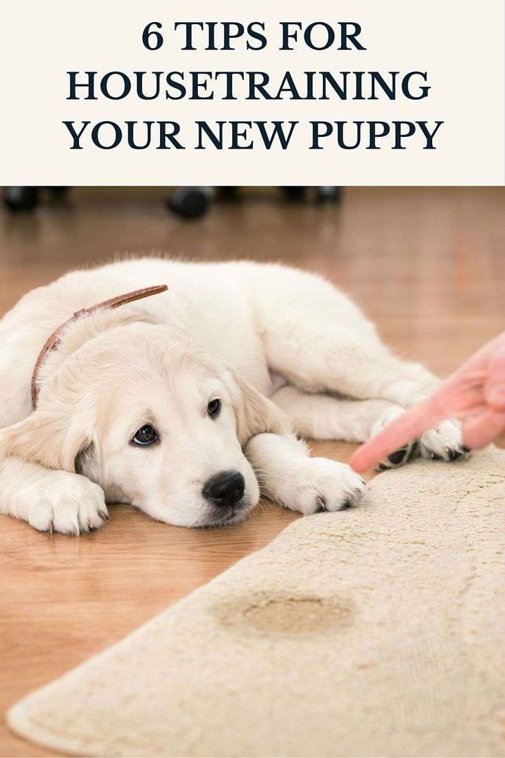 6 Tips for Housetraining Your New Puppy -http://www.tidbitsofexperience.com/wp-content/uploads/2016/03/6-TIPS-FOR-HOUSETRAINING-YOUR-NEW-PUPPY-640x960.jpg http://www.tidbitsofexperience.com/6-tips-housetraining-new-puppy/