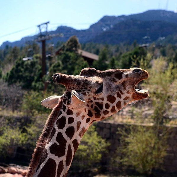 Mountain View Restaurant At Cheyenne Mountain Colorado: 17 Best Images About Cheyenne Mountain Zoo On Pinterest