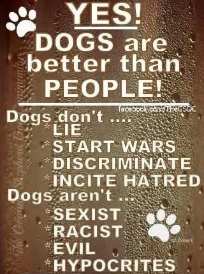 Yes! Dogs are better than people! Dogs Don't ... Lie, start wars, discriminate, incite hatred Dogs Aren't ... sexist, racist, evil, hypocrites