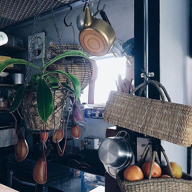 tami_73 on Instagram pinned by myThings ✎ 吊りコーナー。 いろいろぶらんぶらん。 ✎  #タナホーム #籠#かご収納#収納 #吊り下げ#吊り収納#やかん #アルミ#アルミ鍋 #観葉植物#ネペンテス #kitchen#台所#台所道具