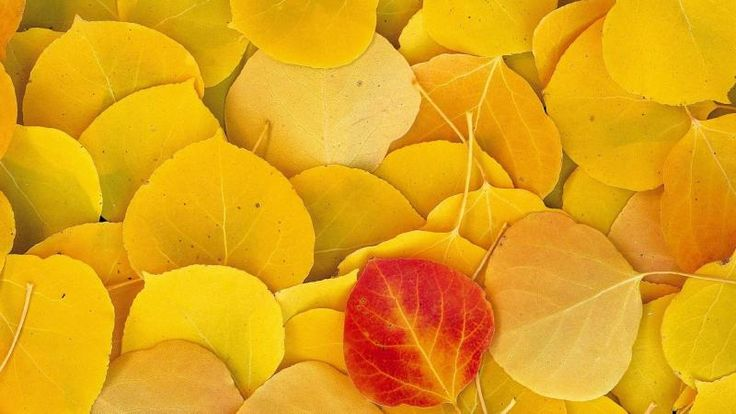 Nature Autumn Yellow Leaves