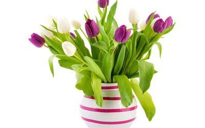 Scarica sfondi tulipani, tulipani bianchi, un bouquet di tulipani, viola tulipano