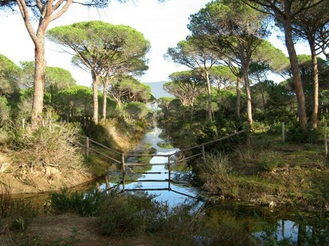 Pineta a Principina a Mare  Toscana