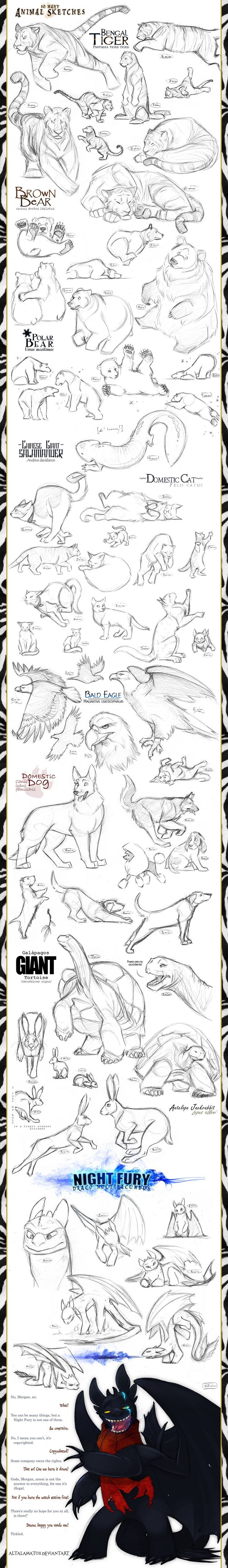 Animal Sketches by Altalamatox.deviantart.com on @deviantART || CHARACTER DESIGN REFERENCES | Find more at: