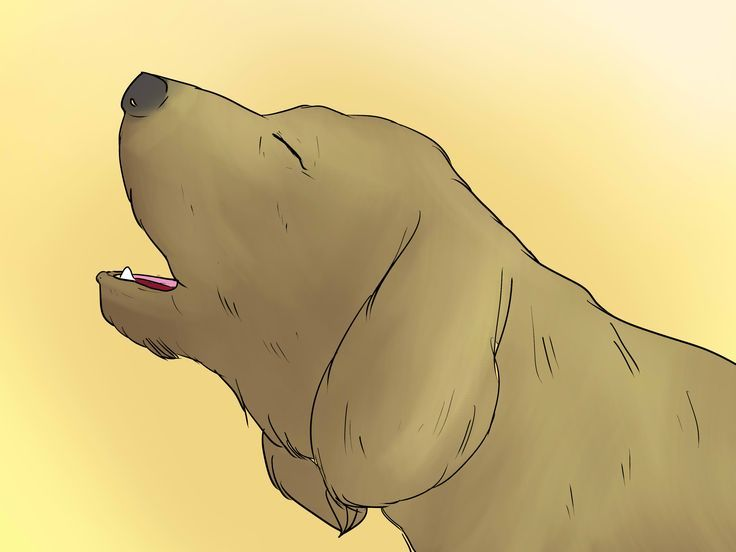 dog training tips - including how to stop barking - tip apply to other behavior that you do not want