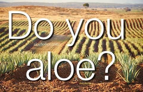 Aloe is one of the oldest and still most misunderstood medicinal/health plants. http://aloeholics.com