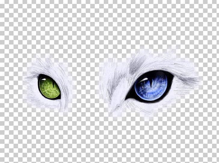 Ojos Azules Odd Eyed Cat Blue Cats Eye Png Animal Background Green Blue Blue Background Brand Blue Cats Cats Blue Backgrounds