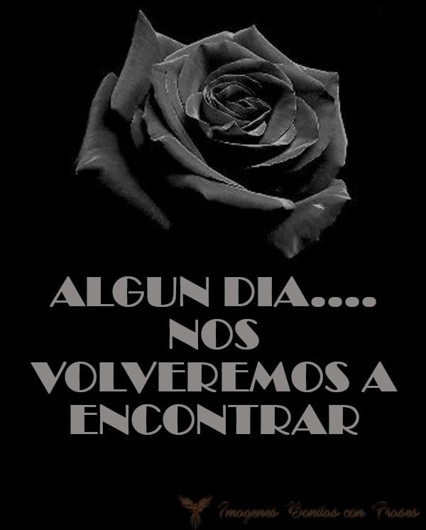 Imágenes De Rosas Negras Con Frases Frases Pinterest
