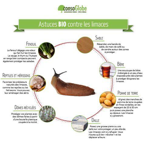 Éloigner les limaces dans le jardin ou le potager