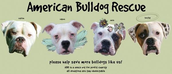 Please help save more bulldogs like us!  American Bulldog Rescue dancelexi