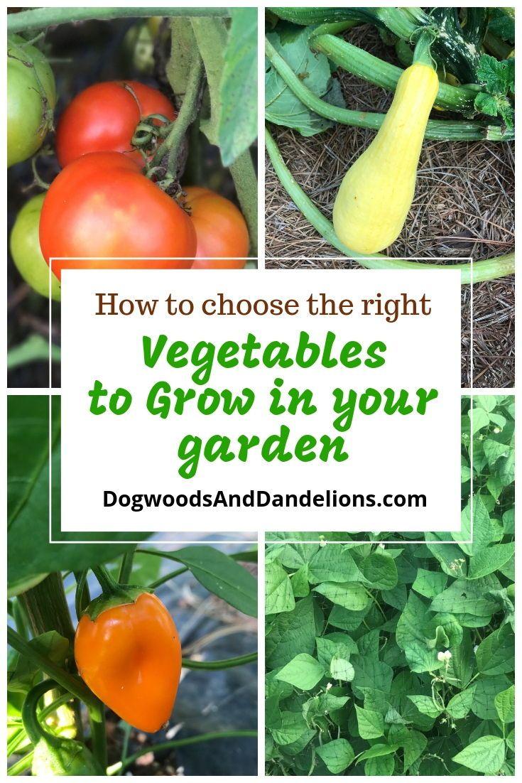 Easy Vegetables To Grow In Your Garden Growing Vegetables