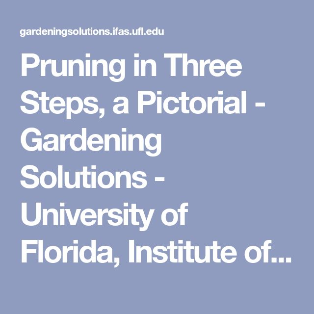 Pruning in Three Steps, a Pictorial - Gardening Solutions - University of Florida, Institute of Food and Agricultural Sciences