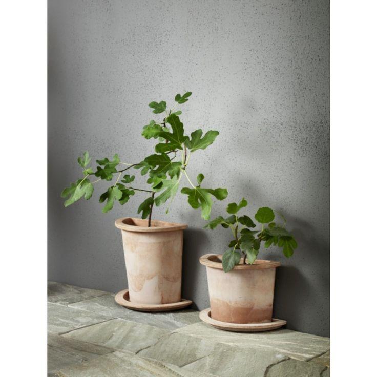 Halvkruka Olea i terrakotta, lätt att placera mot t ex en vägg. Med olika form, höjd och storlek gör Olea-serien det lätt att få rum med växter även på små ytor. Höjd 35cm. Frostsäker och klarar ner till -25 grader. ...