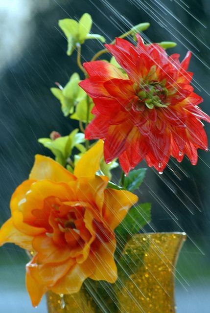 """""""Y cuando llovía, me entraba agua hasta el alma..."""":"""