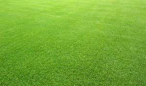 Bermuda grass care