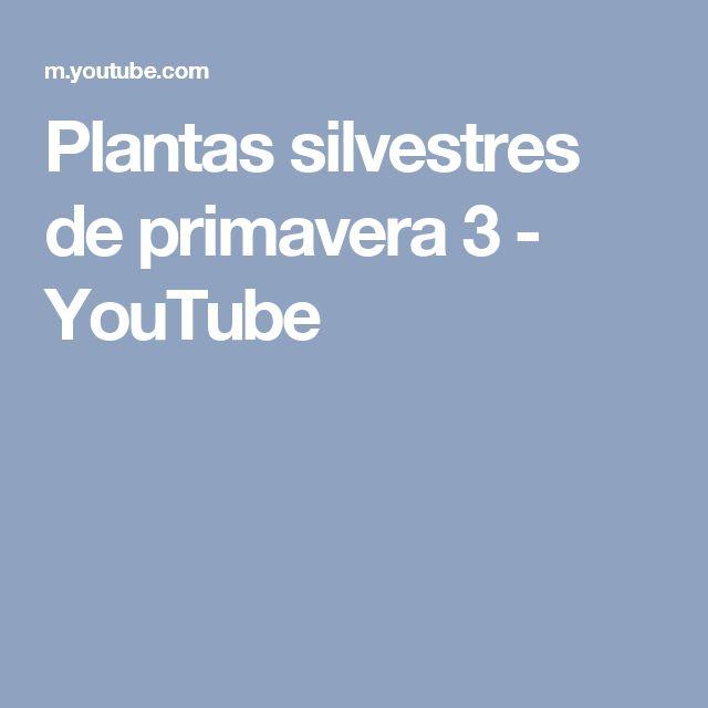 Plantas silvestres de primavera 3 - YouTube