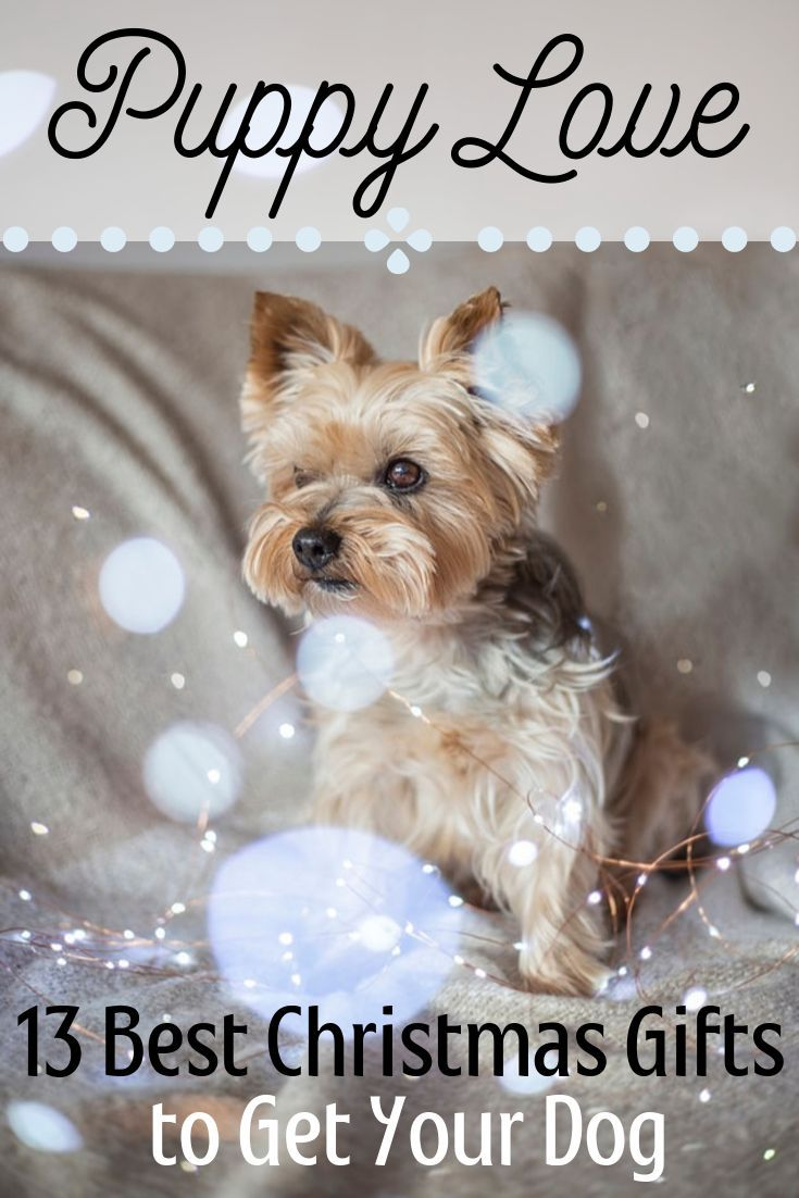 The Best Christmas Gifts For Dogs Dog Christmas Gifts Dog Gifts Christmas Fun