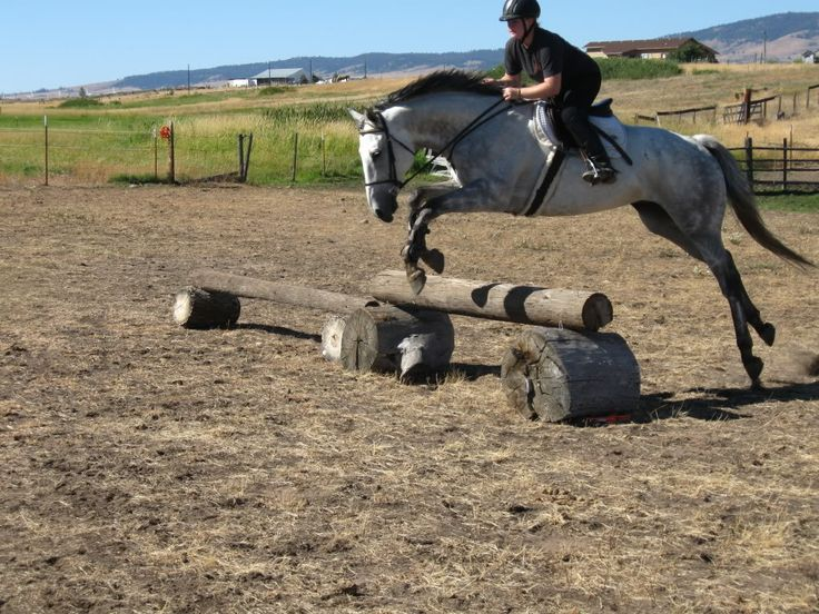 IDEAS PLEASEBuilding your own Cross Country Course - Page 2 Xc - horse trainer sample resume