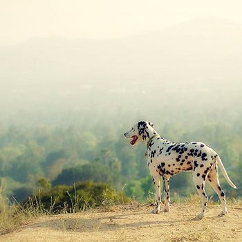 Best Places To Hike With Your Dog (Besides Runyon): LAist
