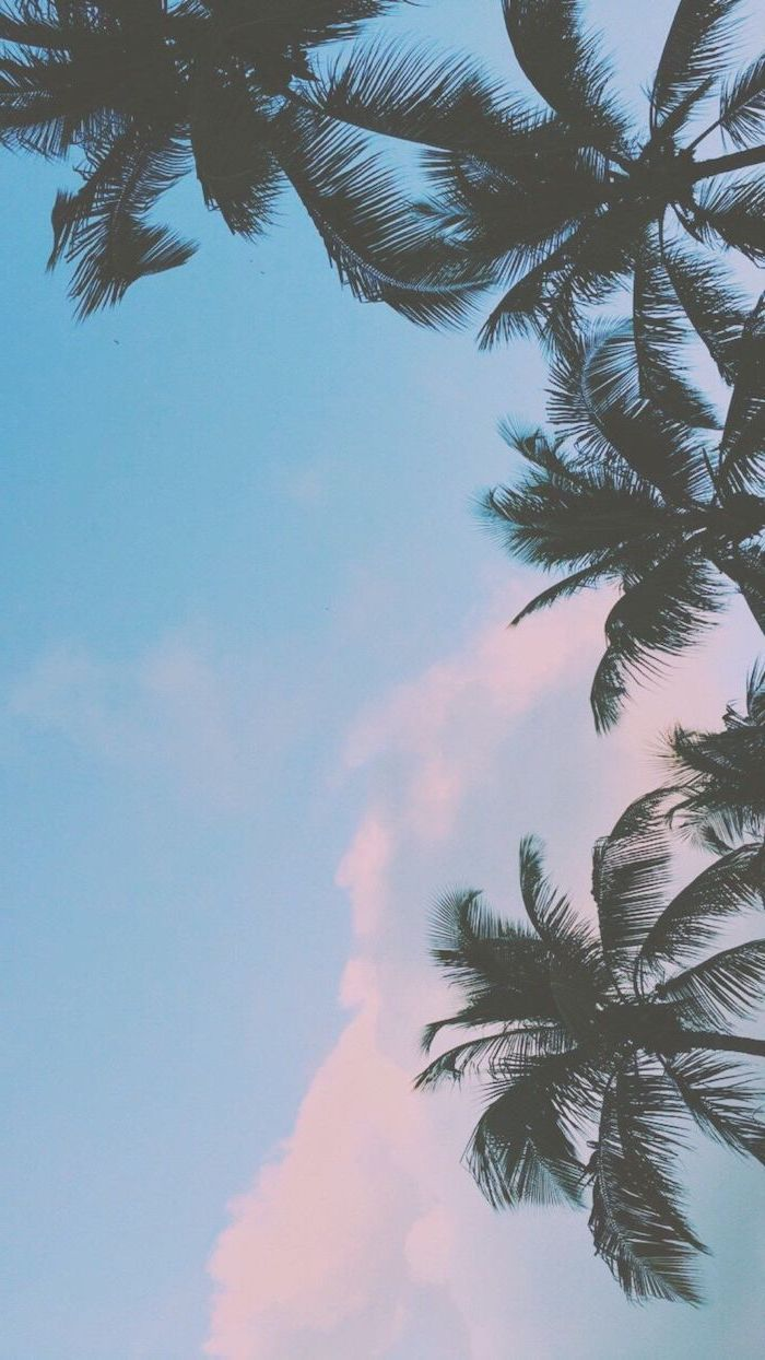 Cute Iphone Wallpapers Blue Sky Tall Palm Trees Palm Trees Wallpaper Iphone Wallpaper Hipster Palm Trees Tumblr Wallpaper palm trees on blue sky