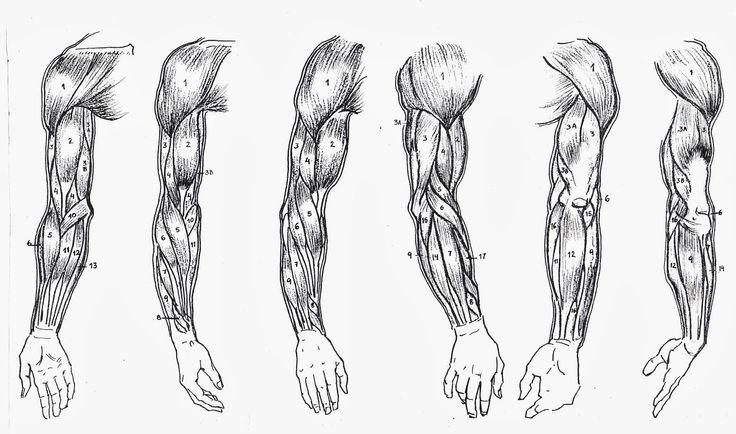 Mejores 8 imágenes de Muñeca y mano. Anatomia, articulaciones y ...