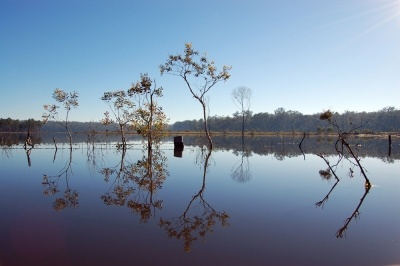 Wongi State Forest is located 25 kilometers west of Maryborough. There are a string of waterholes too cool of in summer. We just stopt there to take some photos, it is a nice place