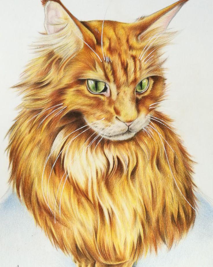 My next cat drawing, Tadeusz, polychromos color pencil art by Magdalena Leszczyniak