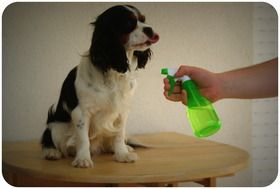 Recette de répulsif anti-puces, anti tiques pour chien (huiles essentielles)