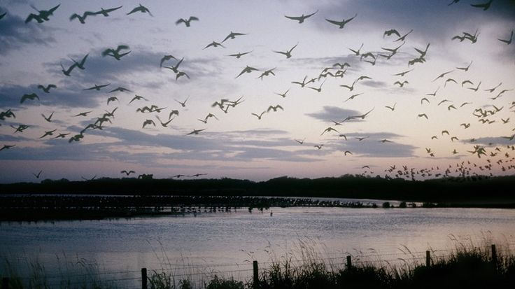 RSPB Scotland's Loch of Strathbeg nature reserve has been awarded £53,250 of funding to transform the visitor facilities and volunteer accommodation at the site near Fraserburgh in Aberdeenshire.