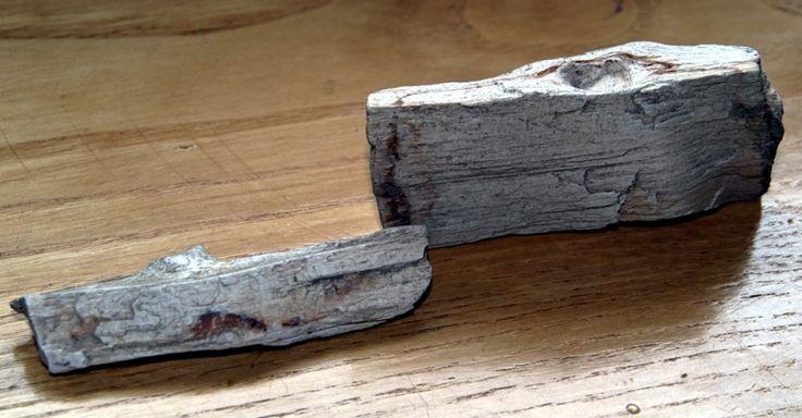 Skamieniałe drzewo Otomin 2015-05-10