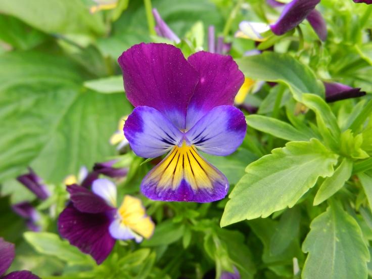 Flowers in the garden of Eden